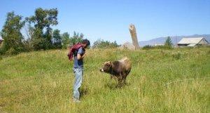 Azad Cow